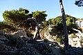 30.12.16 Dubrovnik Lovrijenac Gradac Park 07 (31139915704).jpg