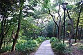 333, Taiwan, 桃園市龜山區龜山里 - panoramio (34).jpg