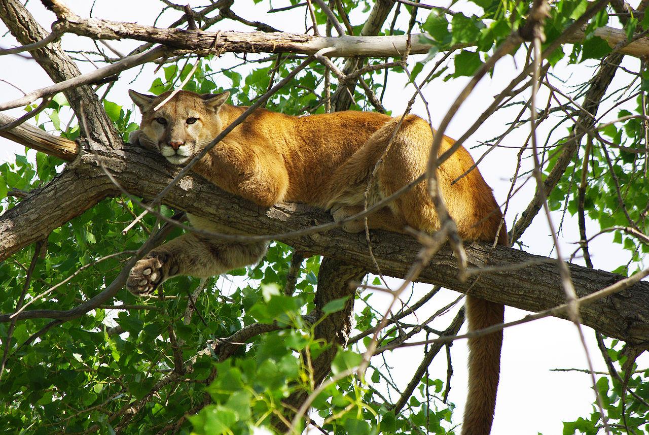 Staten Island Wildlife Preserve