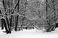 9021vik Park w Pszczynie . Foto Barbara Maliszewska.jpg