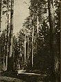 Aŭgustoŭskaja pušča. Аўгустоўская пушча (1936).jpg