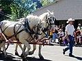 ACD Horses in Parade.jpg
