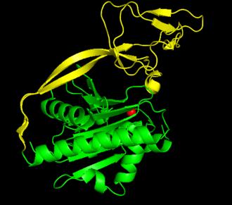 Aspartoacylase - Image: ASPA domains