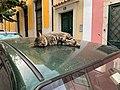 A cat bed (31681254268).jpg