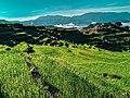 A farmer at Maligcong Rice Terraces.jpg