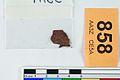 A fragment of silver pressblech foil from a helmet (FindID 555827).jpg