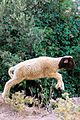A little lamb jumping in Zaouia d'Ifrane.jpg