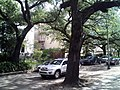 A ride down St Charles 3.jpg