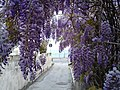A scented archway.jpg