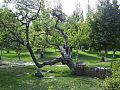 A small view of a nearby garden in gilgit.jpg