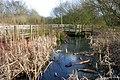 A walk round Martin's Pond (10) - geograph.org.uk - 728476.jpg