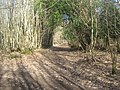 Access track in Newpark Woods - geograph.org.uk - 1735673.jpg
