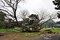 Acharya Jagadish Chandra Bose Indian Botanic Garden - Howrah 2011-02-20 1555.JPG