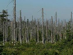 250px Acid rain woods1