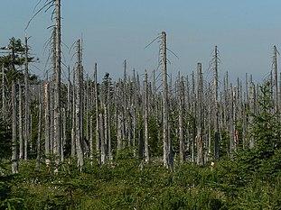 external image 311px-Acid_rain_woods1.JPG