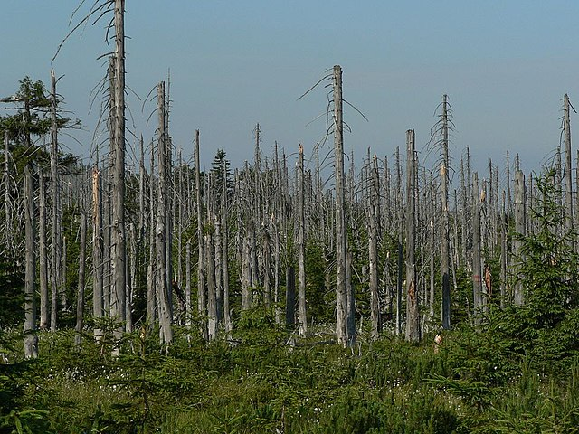 Stromy poškodené kyslými dažďami