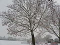 Addiscombe recreation park in snow 3.JPG
