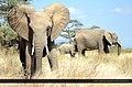 Africa's Heart - Flickr - Gabby Canonizado 02 (New account).jpg