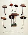 Agaricus spadiceo-griseus — Flora Batava — Volume v19.jpg