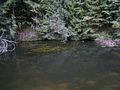 Ahja jõgi Valgemetsas.JPG