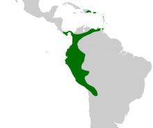 Aiphanes occurs in northwestern South America, south into Bolivia and east to northeastern Venezuela, in Panama and in Trinidad, Puerto Rico and eastern Hispaniola.