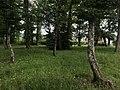 Aire du Creux Moreau - arbres.JPG