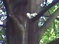 AlbinoSquirrelColumbusOhio.jpg