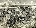 All about animals. Facts, stories and anecdotes (1900) (14775171161).jpg
