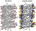 All atom vs coarse grain DPPC bilayer.png
