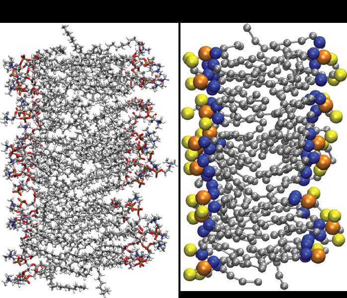 File:All atom vs coarse grain DPPC bilayer.png