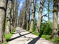 Allee im Schlosspark Eutin.jpg