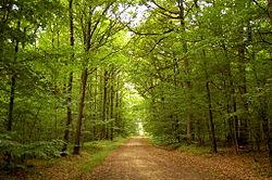 forêt de dourdan wikipédia
