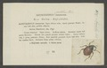 Amalus - Print - Iconographia Zoologica - Special Collections University of Amsterdam - UBAINV0274 030 04 0020.tif