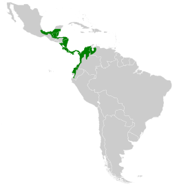 Amazilia tzacatl map.svg