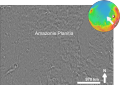 Amazonis Planitia based on day THEMIS.png