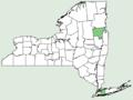 Amsonia tabernaemontana var tabernaemontana NY-dist-map.png