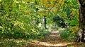 An Autumnal Stroll - geograph.org.uk - 335858.jpg