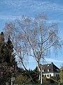 An der Palmweide, Dortmund, 20.3.14 - panoramio (1).jpg
