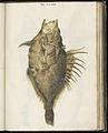 Animal drawings collected by Felix Platter, p1 - (8).jpg