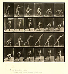 Animal locomotion. Plate 307 (Boston Public Library).jpg