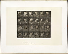 Animal locomotion. Plate 703 (Boston Public Library).jpg