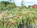Ann's Farm (14).jpg