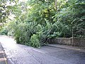 Another Braid Road casualty - geograph.org.uk - 915812.jpg