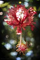 Anti-Gravity Flower (2183249598).jpg