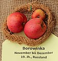 Apfel 023 Borowinka (fcm).jpg