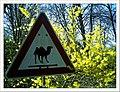 April Camel Filter Parc Natural Mundenhof Freiburg - Master Botany Photography 2013 - panoramio.jpg