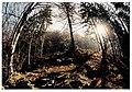 April Kandel - Mythos Black Forest Photography 1990 - panoramio.jpg