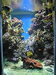 File aquarium wikimedia commons for Petit aquarium original