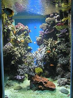 Um aquário marinho.
