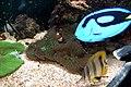 Aquarium - panoramio (3).jpg